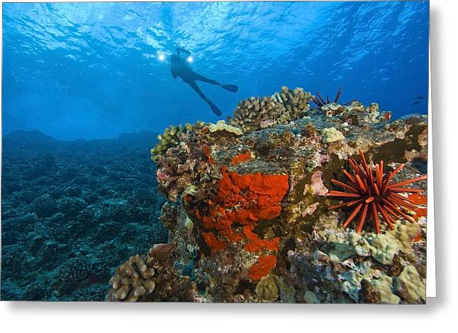 Hawii Greeting Cards - Molokini Crater, South Maui, Hawaii Greeting Card by Stuart Westmorland