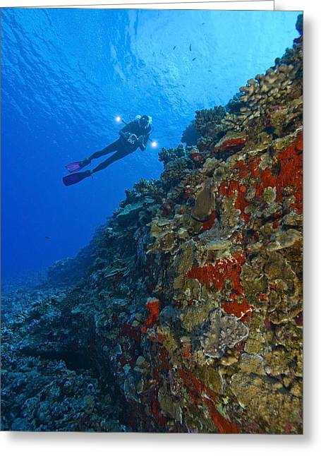 Only Mid Adult Women Greeting Cards - Molokini Maui Hawaii Usa Scuba Diver At Greeting Card by Stuart Westmorland