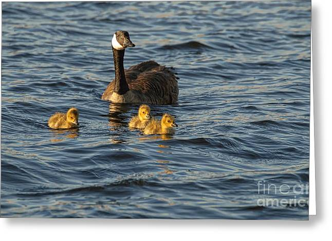 Mother Goose Greeting Cards - Mom and Babes Greeting Card by Jocelyn Ball