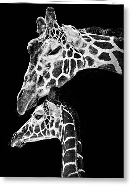 Kids Room Art Greeting Cards - Mom and Baby Giraffe  Greeting Card by Adam Romanowicz