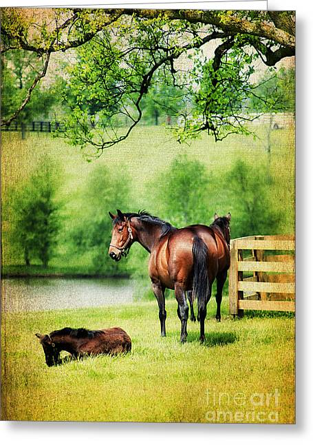 Watching Over Greeting Cards - Mom and Foal Greeting Card by Darren Fisher
