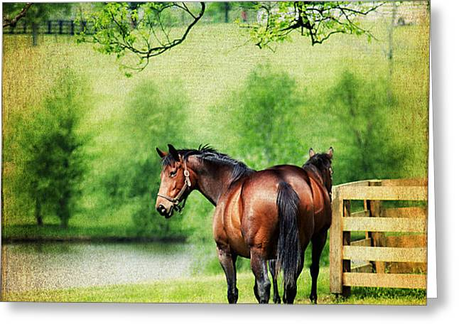 Mom and Foal Greeting Card by Darren Fisher