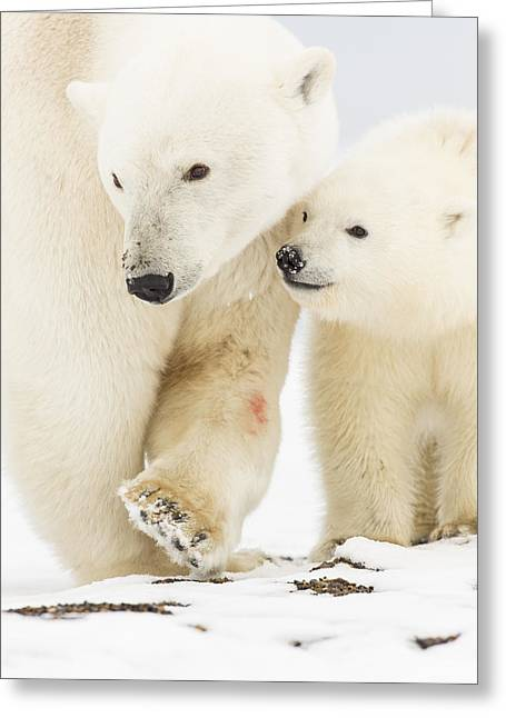 Polar Bear Standing Greeting Cards - Mom and Junior Greeting Card by Tim Grams