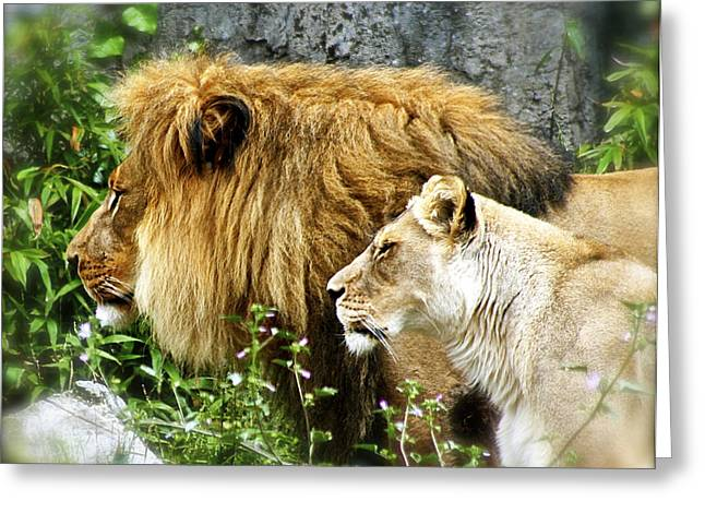 Male Pyrography Greeting Cards - Mom and Pop Lion Greeting Card by DUG Harpster