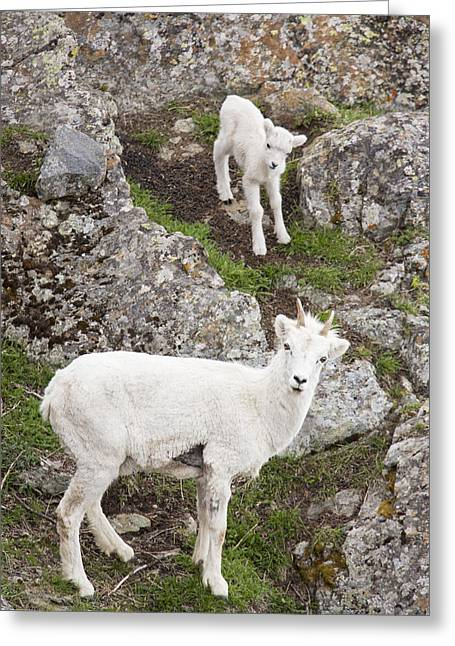 Gray Hair Greeting Cards - Mom and the Youngster Greeting Card by Tim Grams