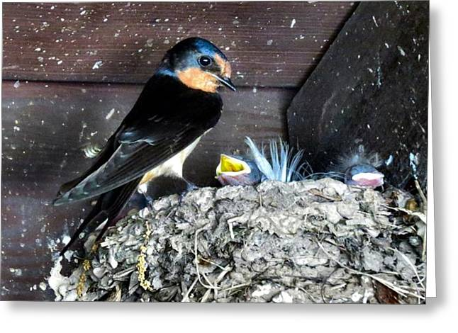 Swallow Nestlings Greeting Cards - Mom Hard At Work Greeting Card by Michelle Milano