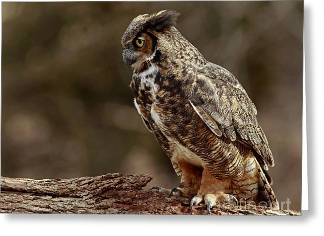 Shelley Myke Greeting Cards - Moments in the Forest Great Horned Owl  Greeting Card by Inspired Nature Photography By Shelley Myke