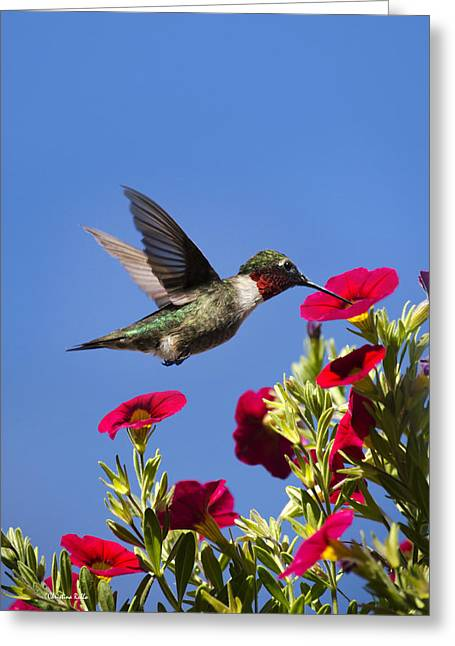 Flying Animal Greeting Cards - Moments of Joy Greeting Card by Christina Rollo