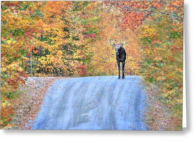 Foilage Greeting Cards - Moments That Take Our Breath Away - No Text Greeting Card by Shelley Neff
