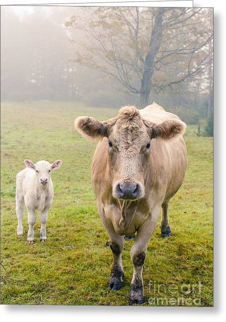 New England Foliage Greeting Cards - Momma and Baby Cow Greeting Card by Edward Fielding