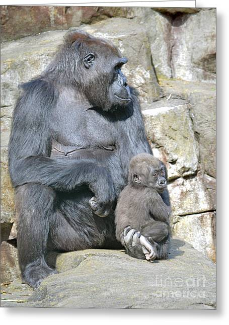Love The Animal Greeting Cards - Momma and Baby Gorilla Greeting Card by Jim Fitzpatrick