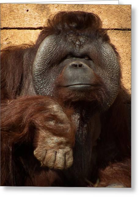 Greenville Zoo Greeting Cards - Momma Orangutan Greeting Card by Lynne Jenkins