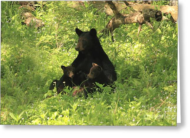 Geraldine Deboer Greeting Cards - Mommy and babies Greeting Card by Geraldine DeBoer