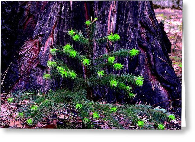 Reflections Of Sky In Water Greeting Cards - Mommy and Baby Pines Greeting Card by Jeff Lowe