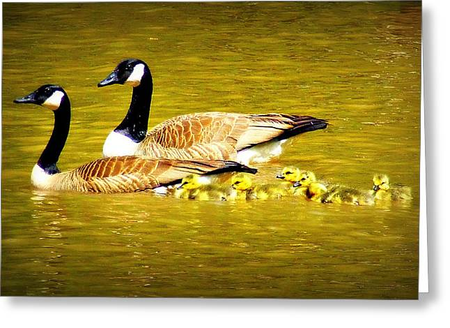 Geese Family Greeting Cards - Moms Leading Greeting Card by Reid Callaway