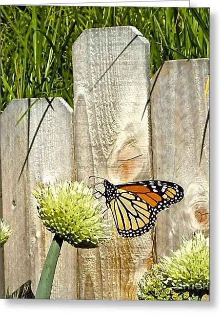 Cocoon Greeting Cards - Fanciful Monach Butterfly Greeting Card by Cheryl Cutler