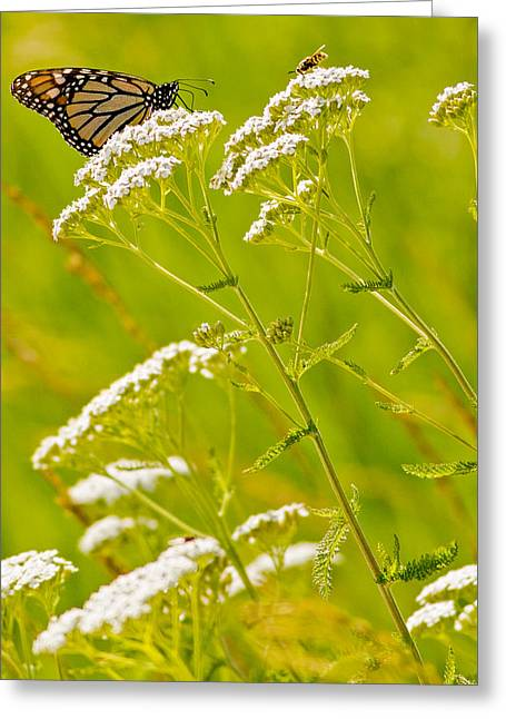 Natural Focal Point Photography Greeting Cards - Monarch and Bee  Greeting Card by Natural Focal Point Photography