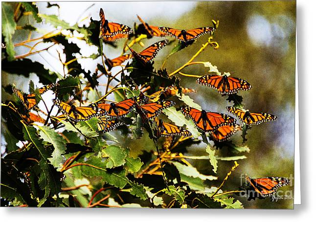 California Beach Greeting Cards - Monarch Butterflies Greeting Card by Yefim Bam