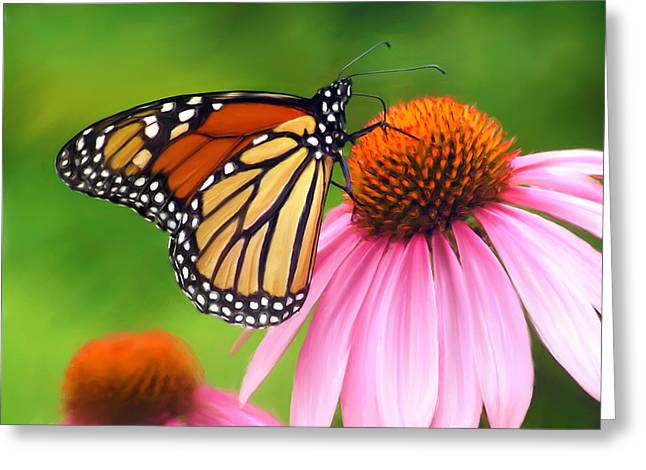 Butterfly On Flower Greeting Cards - Monarch Butterfly Greeting Card by Christina Rollo