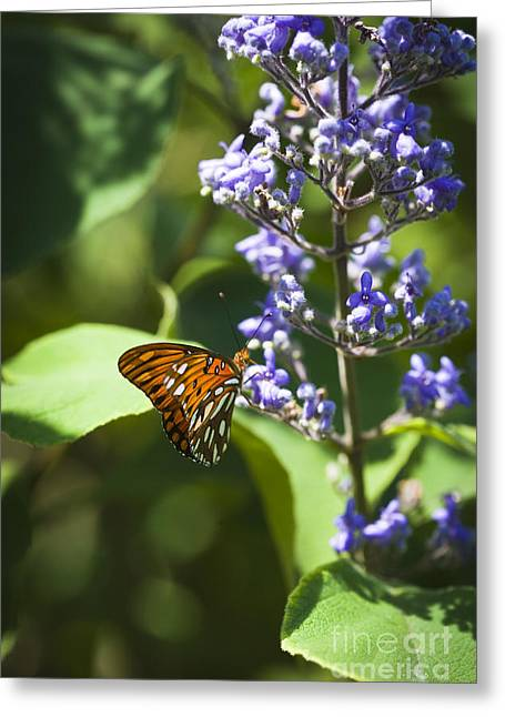 Animal Body Part Greeting Cards - Monarch butterfly Greeting Card by Juan  Silva