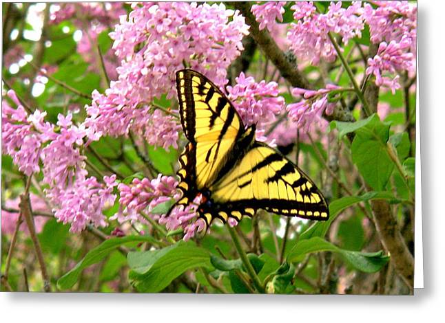 Greek Butterflies Greeting Cards - Monarch Butterfly Greeting Card by Kathleen Viola