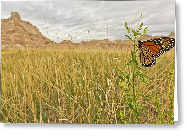 Colorful Cloud Formations Greeting Cards - Monarch Butterfly On A Blade Of Grass Greeting Card by Robert Postma