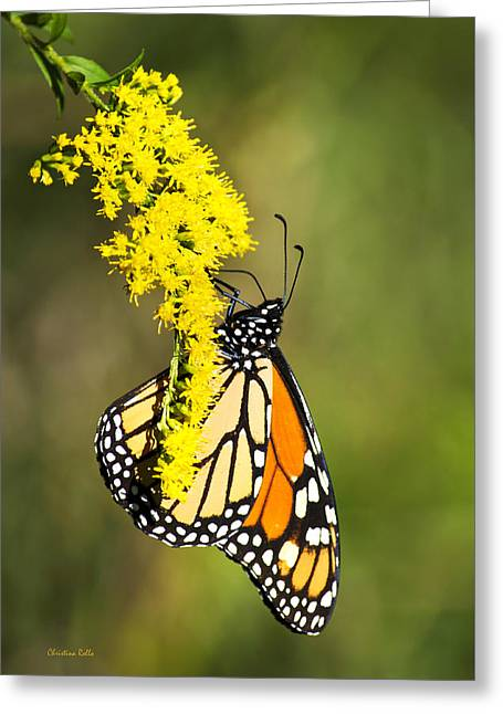 Butterfly On Flower Greeting Cards - Monarch Butterfly On Goldenrod Greeting Card by Christina Rollo