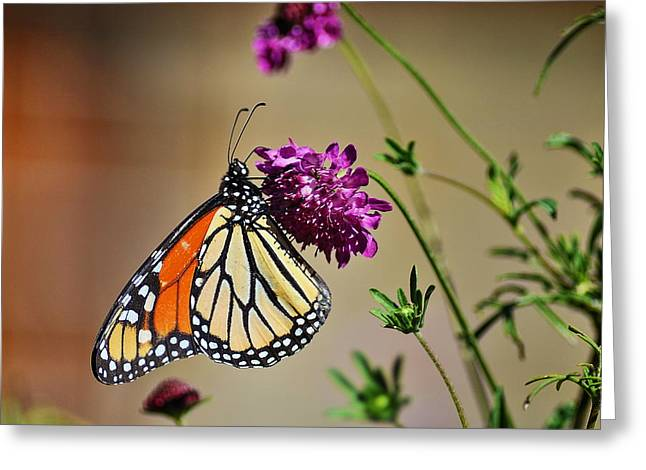 Santa Cruz Art Greeting Cards - Monarch Butterfly Greeting Card by Richard Cheski