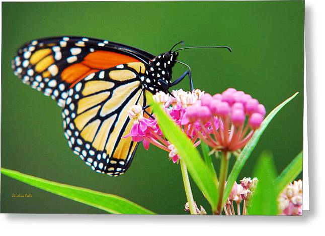Danaus Plexippus Greeting Cards - Monarch Butterfly Simple Pleasure Greeting Card by Christina Rollo