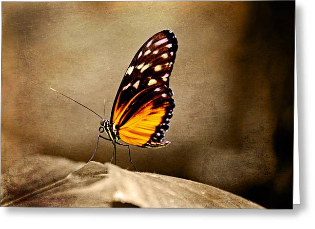 Branson Mo Greeting Cards - Monarch Butterfly Greeting Card by Steven  Michael