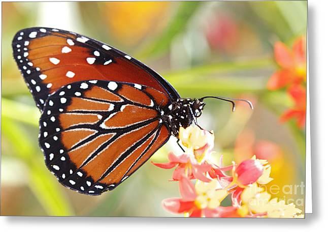 Pamela Gail Torres Greeting Cards - Monarch II Greeting Card by Pamela Gail Torres