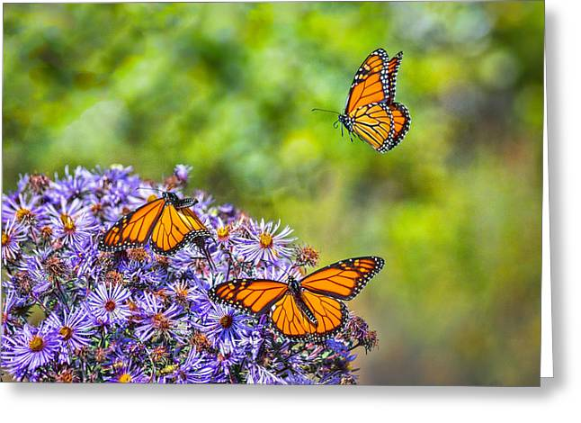Asters Greeting Cards - Monarch Squadron Greeting Card by Bill Pevlor