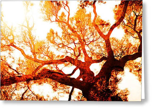 Gelb Greeting Cards - Monarch Tree Greeting Card by Jose Espinoza