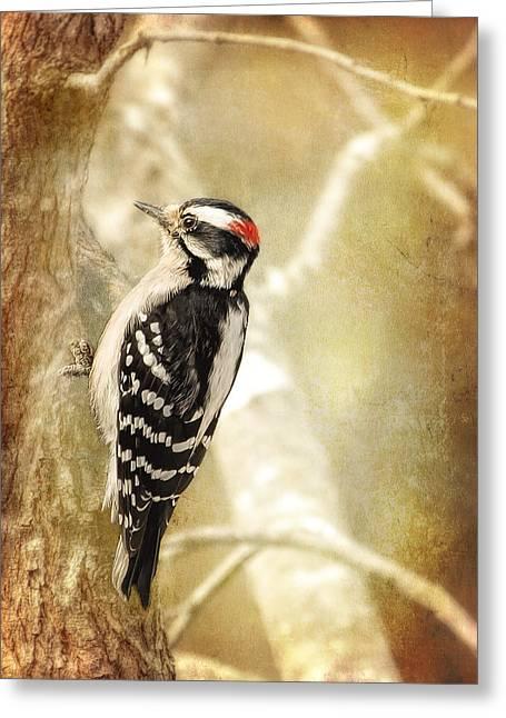 Bird On Tree Digital Greeting Cards - Monday Morning Downy Greeting Card by Bill Tiepelman