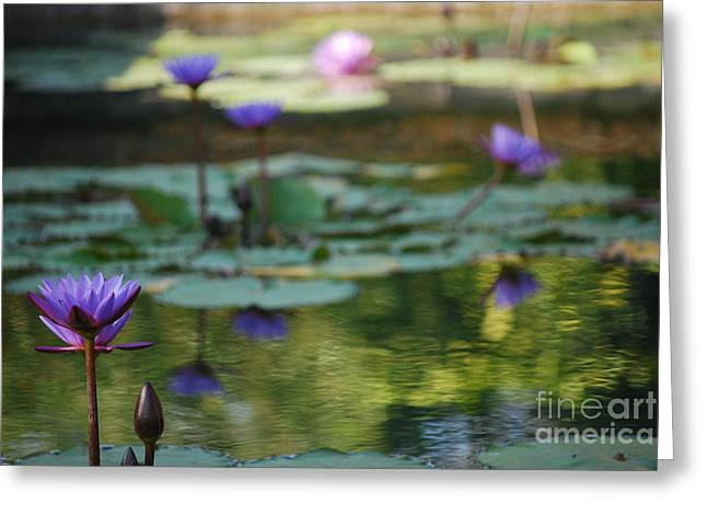 Lilly Pad Greeting Cards - Monets Waterlily Pond Number One Greeting Card by Heather Kirk
