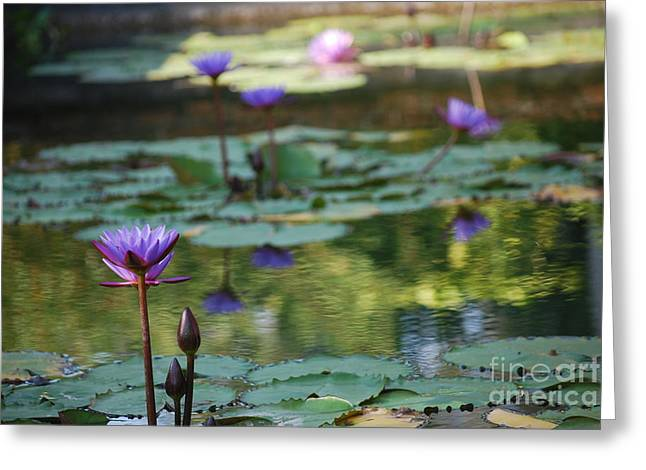 Lilly Pads Greeting Cards - Monets Waterlily Pond Number Two Greeting Card by Heather Kirk