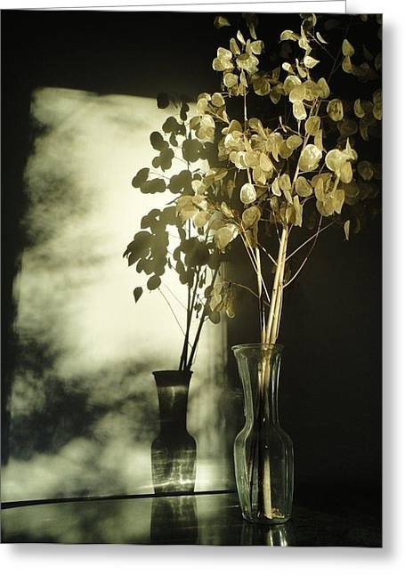 Guy Ricketts Greeting Cards - Money Plants Really Do Cast Shadows Greeting Card by Guy Ricketts