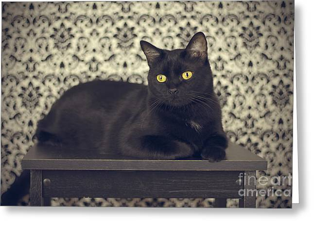 Black Greeting Cards - Mongo The Robust Cat Greeting Card by Jennifer Ramirez