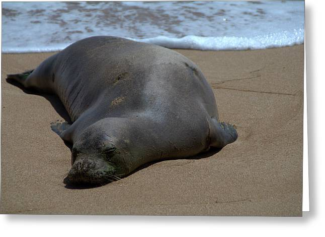 Ocean Mammals Greeting Cards - Monk Seal Sunning Greeting Card by Brian Harig