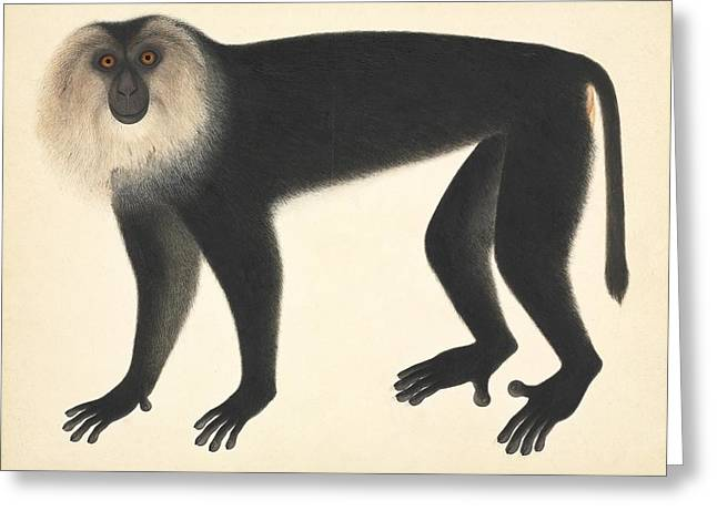 Eutheria Greeting Cards - Monkey, artwork Greeting Card by Science Photo Library