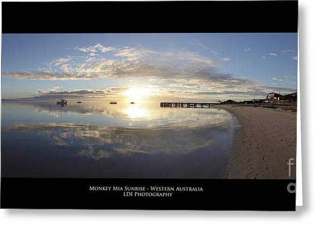 Monkey Mia Greeting Cards - Monkey Mia Western Australia Greeting Card by Diagnostic Photography