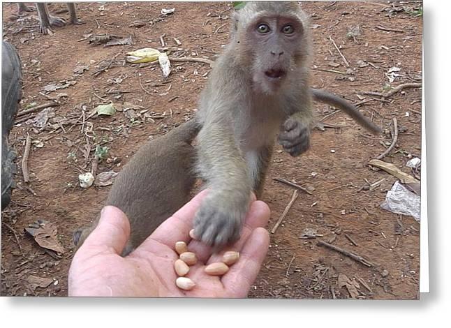 Hand Fed Greeting Cards - Monkey Nuts Greeting Card by Carol Jadzia