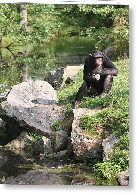 Monkey Thoughts Greeting Card by Dreamland Media