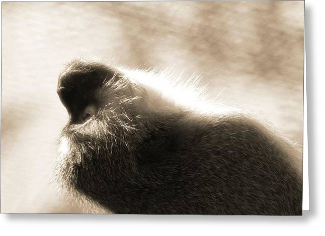 Evolved Greeting Cards - Monkey Yoga Greeting Card by Dan Sproul