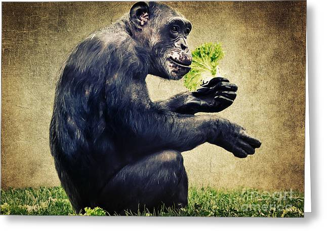 Lettuce Mixed Media Greeting Cards - Monkeys life Greeting Card by Angela Doelling AD DESIGN Photo and PhotoArt