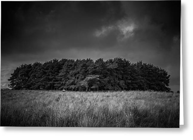 Birmingham Greeting Cards - Mono copse Greeting Card by Chris Fletcher