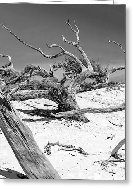 Crooked Island Dunes Greeting Cards - Mono Moonscape Greeting Card by Chris Smith