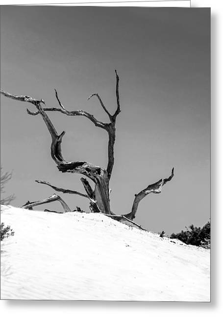 Crooked Island Dunes Greeting Cards - Monochrome Death Greeting Card by Chris Smith