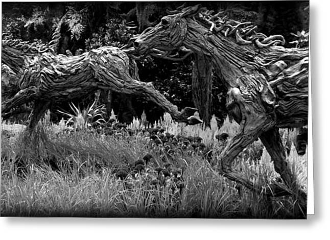 The Horse Greeting Cards - Monochrome Horses Greeting Card by Clare Bevan