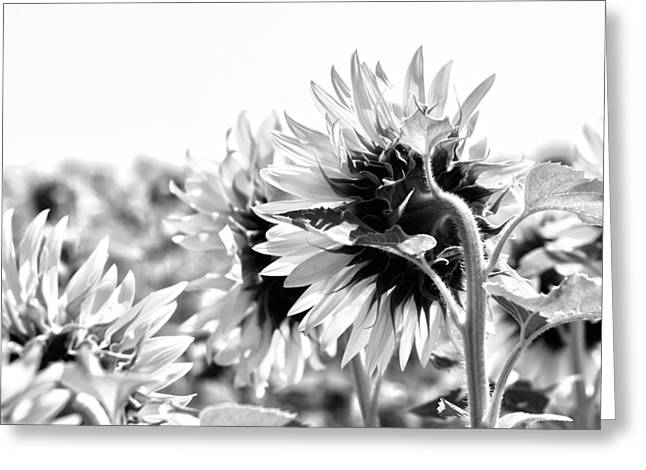 French Open Greeting Cards - Monochrome Summer Greeting Card by Nomad Art And  Design